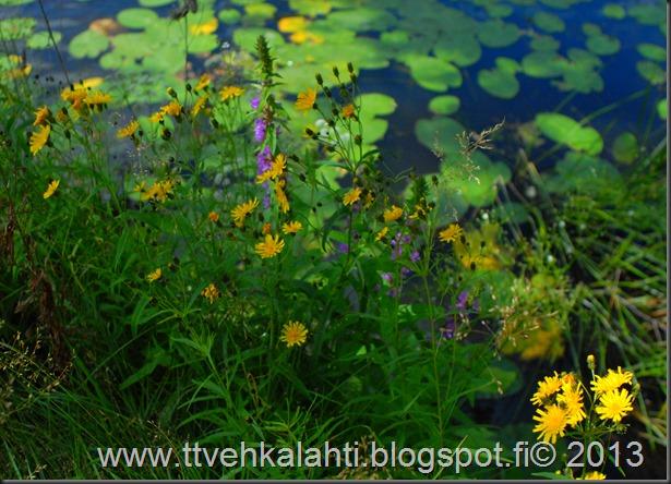 nikon E sarja 28mm silta kukkia 039