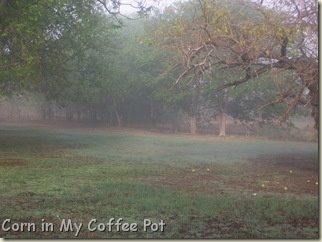 Oct 24 2011- fog pix 128