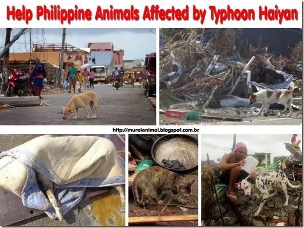 help-animals-haiyan