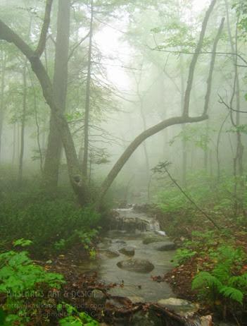 awausee-trail2