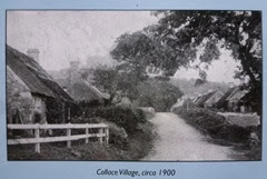 collace 1900