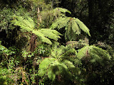 South Island - Milford Sound - Rainforest