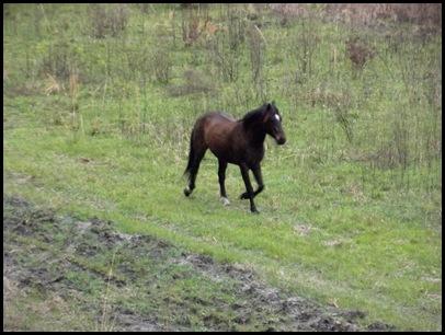 PM horses 035