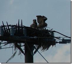 Owlet testing