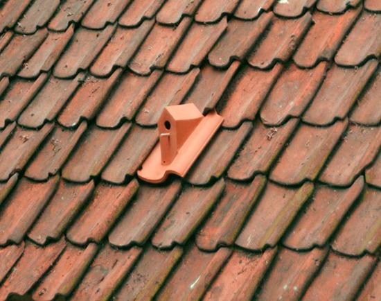Telha casa passarinho 01