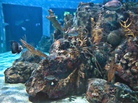 John Pennekamp Coral Reef State Park Aquarium (1)