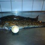 Perra Olsson 3021 gr (störst 2009)