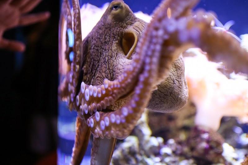 aquarium-19