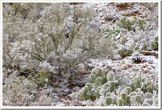 150101_TucsonMtPark_0068