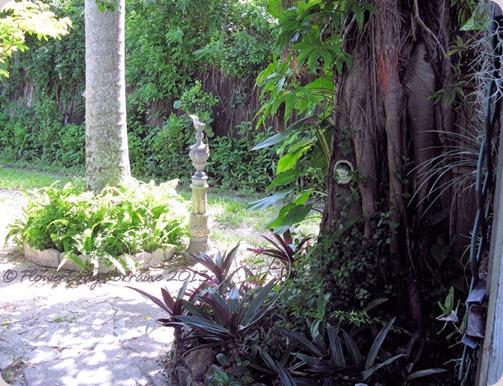 06-16-under-banyan