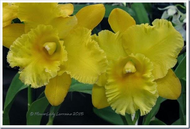 02-08-orchids6