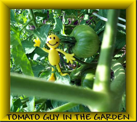 TOMATOGUYINTHEGARDEN