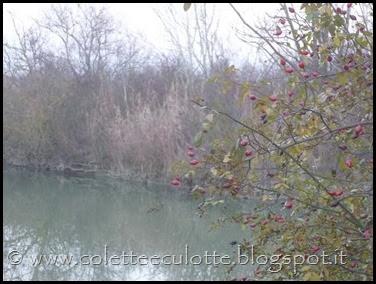 Passeggiata al Dosolo - 1 gennaio 2013 (51)