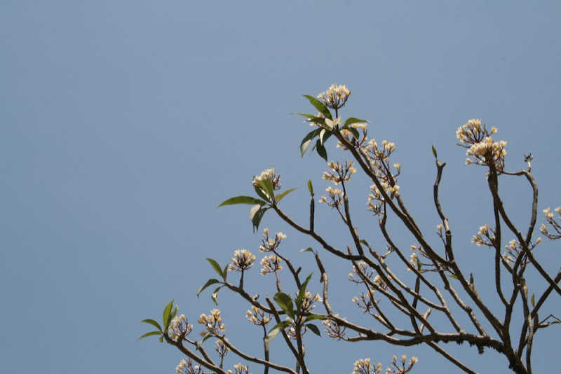 IMG_9134-Wallpapers Flowered branches.JPG