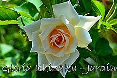 23 - Glória Ishizaka - Rosas do Jardim Botânico Nagai - Osaka