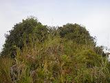 The narrow bushy summit of Gunung Besar (Daniel Quinn, October 2011)