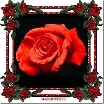 san valentin flores (8)