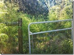 Gate overgrown with weeds