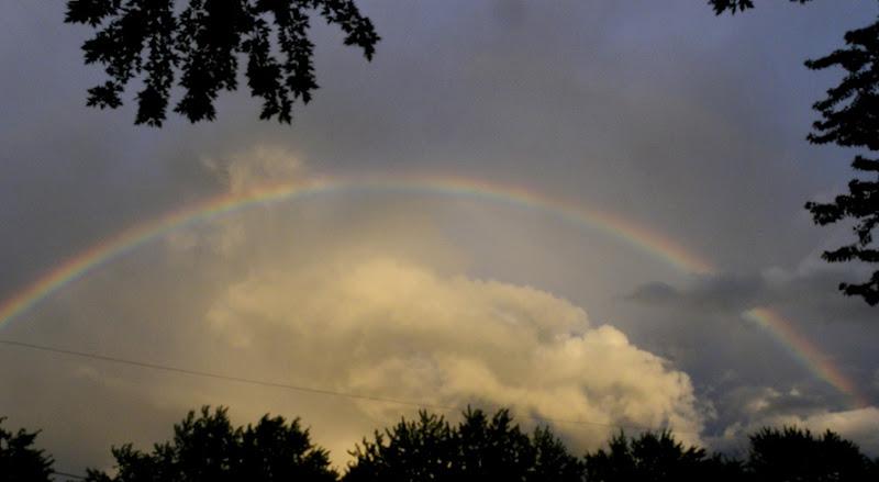 Rainbow (9)