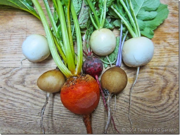 Root_veggies