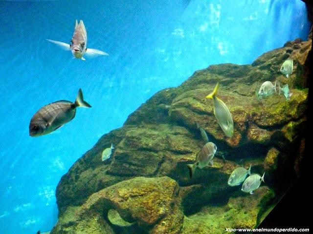 acuario-marino.JPG