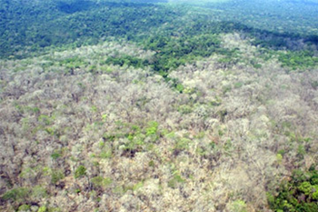 180 hectares (450 acres) of rainforest in the Brazilian Amazon were defoliated using Agent Orange, reports IBAMA, Brazil's environmental law enforcement agency, 6 July 2011. IBAMA / mongabay.com