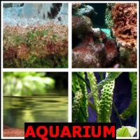 AQUARIUM- Whats The Word Answers