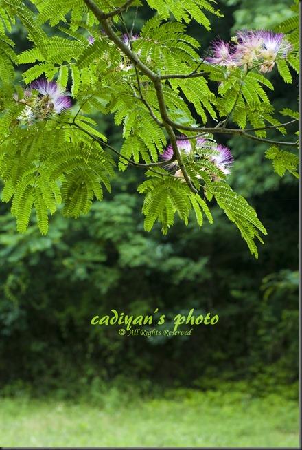 D700_2012-07-17_015