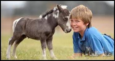 حصان صغير