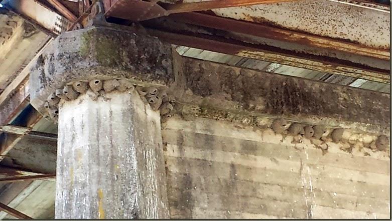 monte rio mud nests e