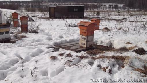 Подготовка семей к зимовке