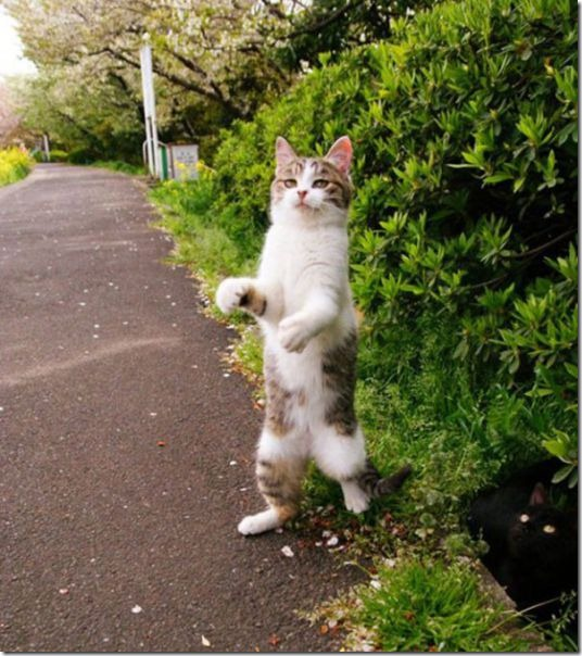 cats-timed-perfectly-21
