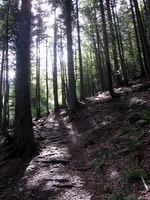 Sončni žarki osvetljujejo pot skozi gozd