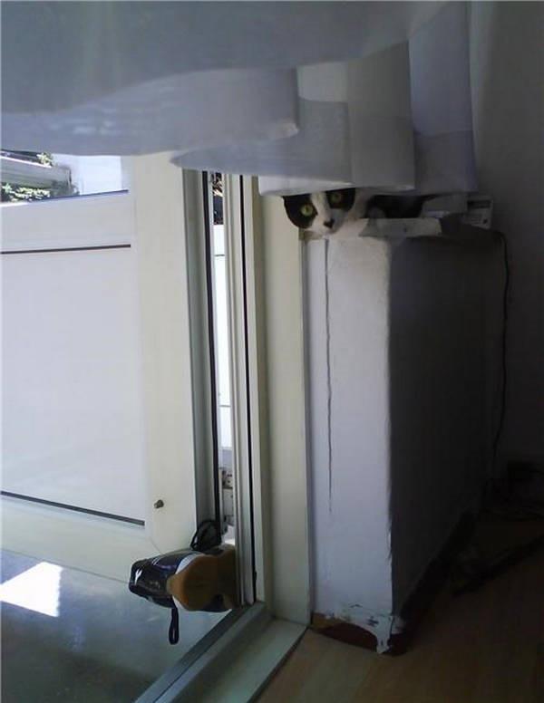 Os gatos não são muito bons em esconde-esconde 30