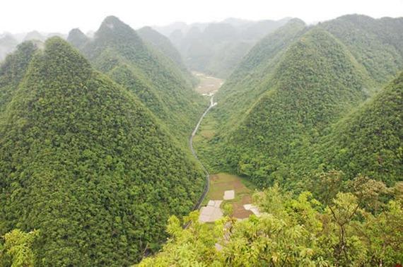 Libo Karst Forest