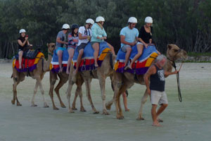 Camels on Stradbroke Island