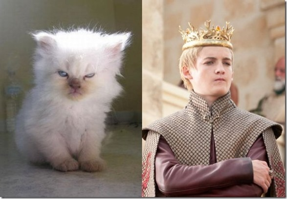 cats-game-thrones-16