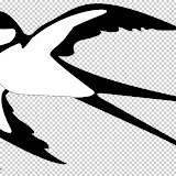 swallow-picture-color.jpg