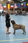 20130511-BMCN-Bullmastiff-Championship-Clubmatch-2276.jpg