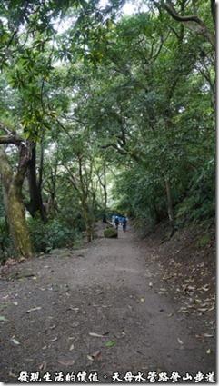 天母水管路登山步道,其中一段平坦的路段,綠蔭蒼蒼