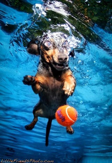 underwater-dog-weiner