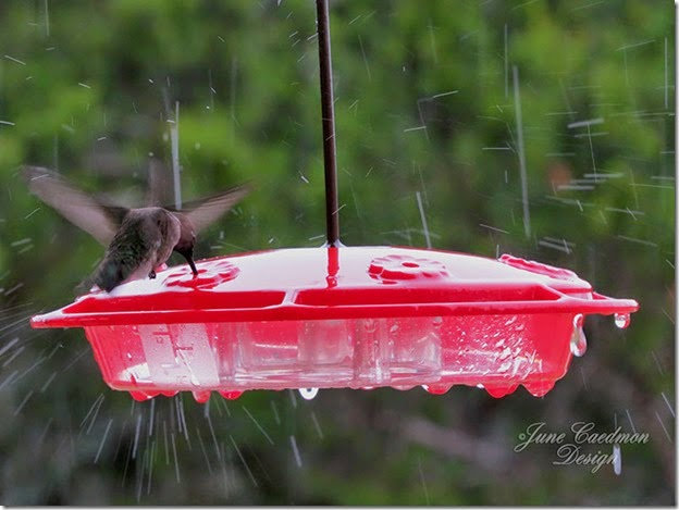 Hummingbird_Feeder_Rain