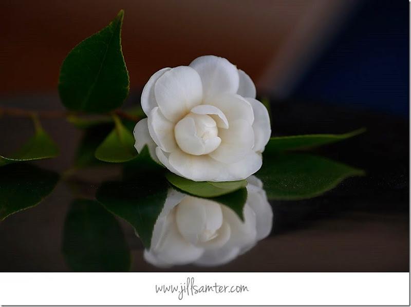 flower_5284