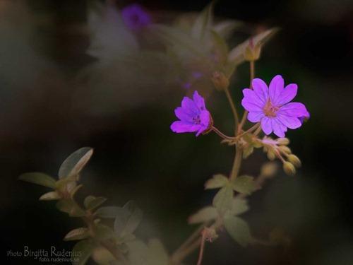 blom_20111021_nava_ytoskarpa