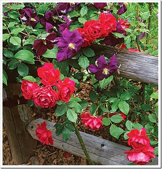 1725120-flowers-slide11-xl