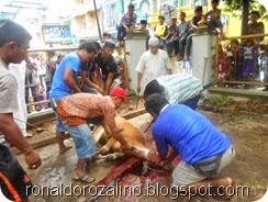 Suasana Pemotongan Hewan Kurban di Masjid Raya Kota Teluk Kuantan (1)
