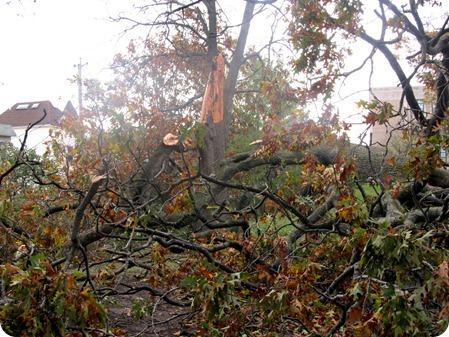 NYC Damage from Hurricane Sandy