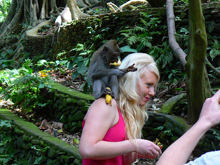 Bali travel: a monkey on top of a blonde tourist