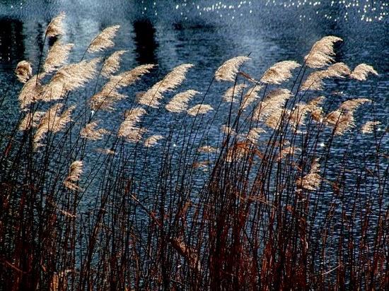 Seagrass 255877 640