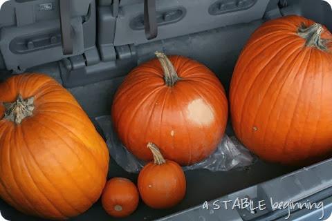 Pumpkins 026